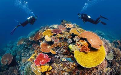 壁纸 海底 海底世界 海洋馆 水族馆 桌面 400_250